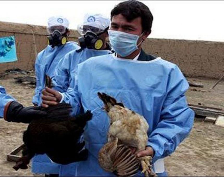 pticji-grip-holandija