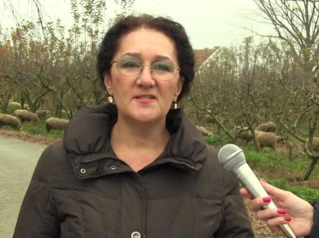 СДСМ меѓу другото ја обвини владата за ненавремено исплаѓње на субвениците во сточарството