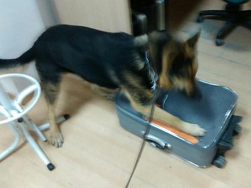 Марихуаната била откриена со помош на царинско куче што било користено при преглед на автобусот