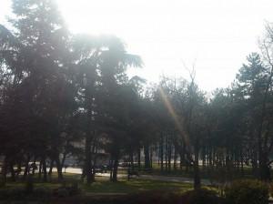 vreme soncevo