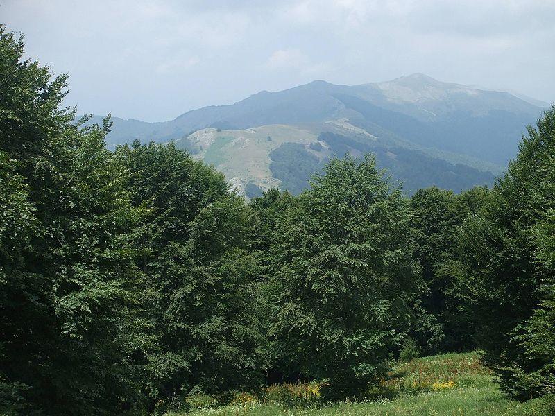 shuma, ilinska planina