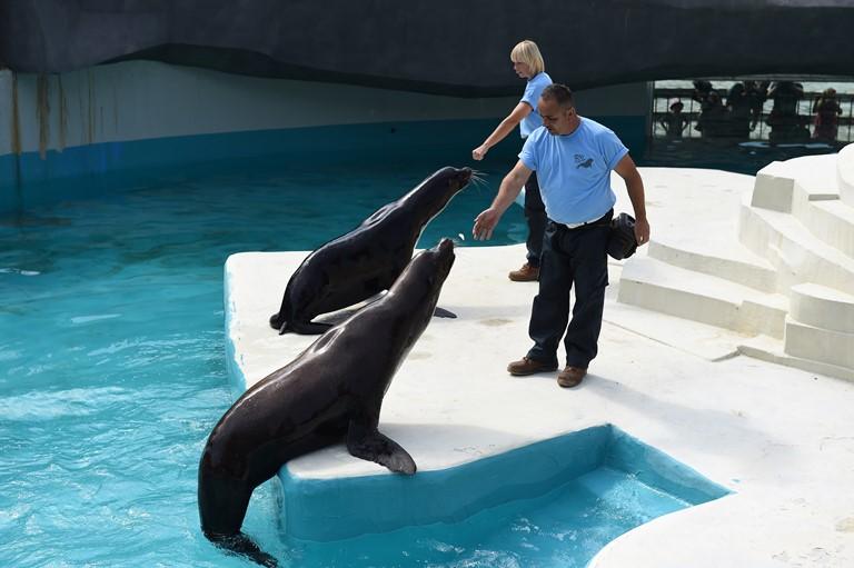Promocija na novi zivealista vo Zooloska - Morski lavovi (8)