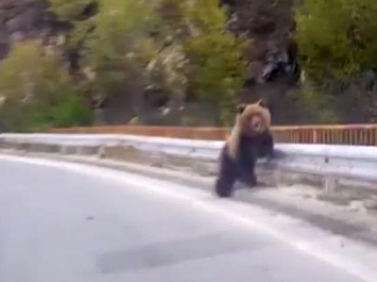 мечка пат