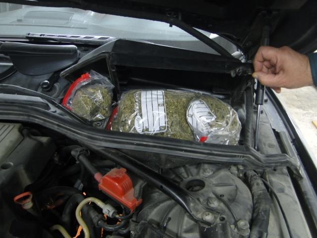 marihuana kafasan