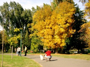 park esen lisja sonce vremenska prognoza park Skopje