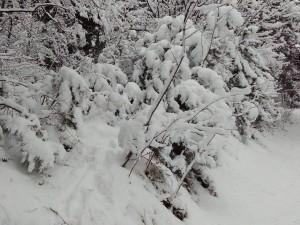 sneg Vodno (1)