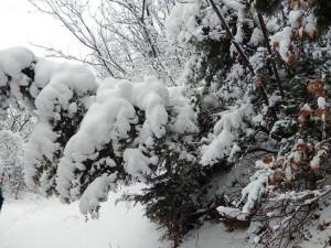 sneg Vodno (3)