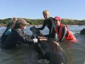kitovi nov zeland