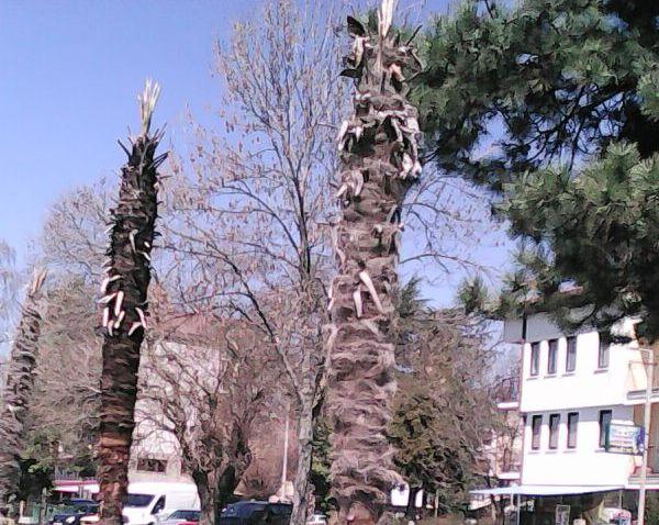 исушени палми
