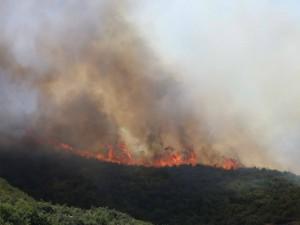 Шумски пожар 4 авг 17 - ЦУК