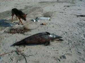 delfin mrtov crno more romanija