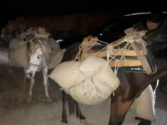 Konji vrekji