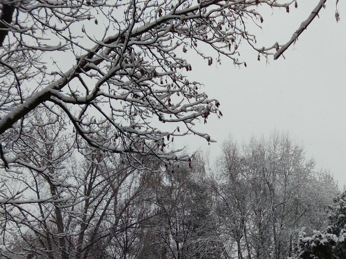 2 drva sneg ovoshki 22mar18 - Meta
