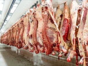 jagnesko meso