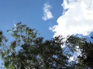 Prolet vedro oblaci umereno oblachno 16maj18 - Meta