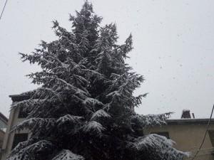 Sneg Skopje 10jan19 - Meta