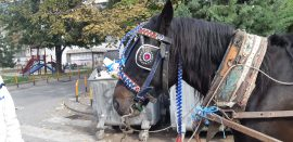 Horse with blinkers.
