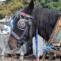 Коњ со наочници.